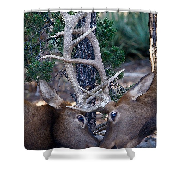 Locking Horns - Well Antlers Shower Curtain