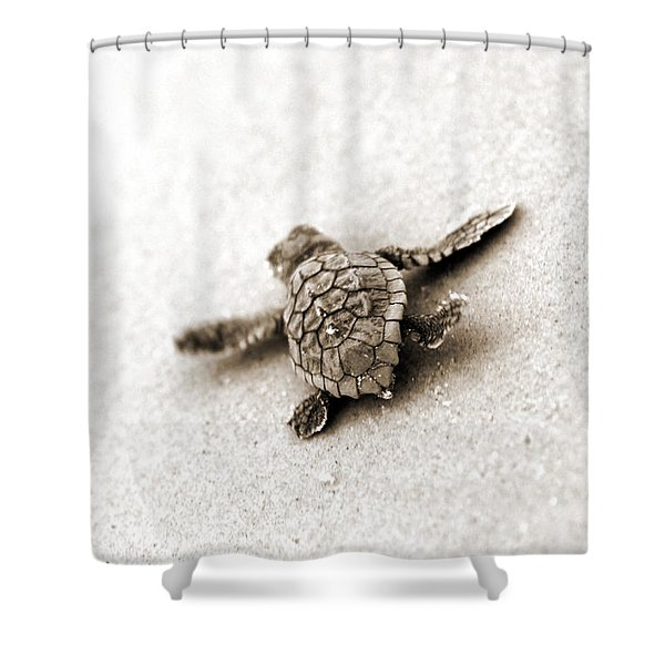 Loggerhead Shower Curtain