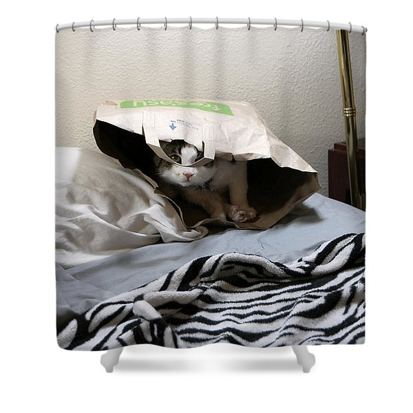 Lois's Favorite Cat Picture In The Whole Wide World Shower Curtain