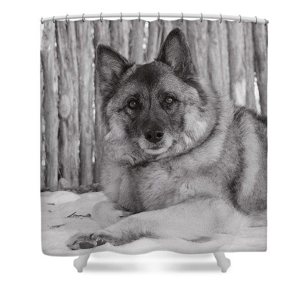 Loki By Fence Shower Curtain