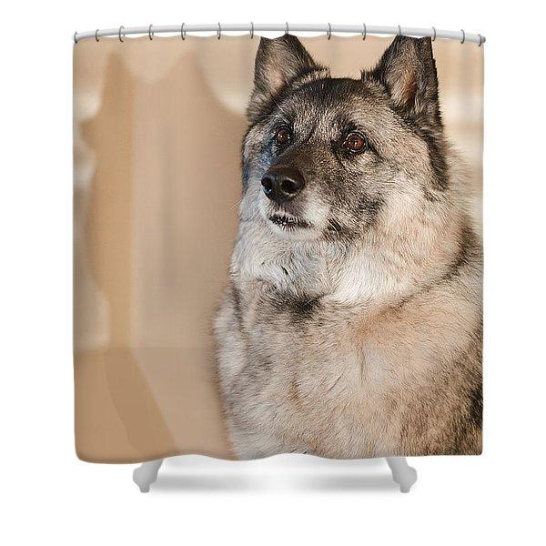 Loki Sepia Shower Curtain
