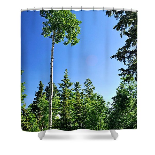 Lone Aspen Shower Curtain
