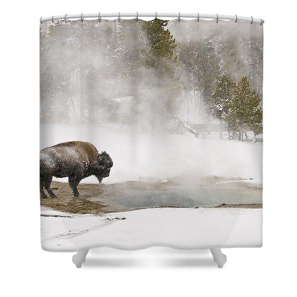Bison Keeping Warm Shower Curtain