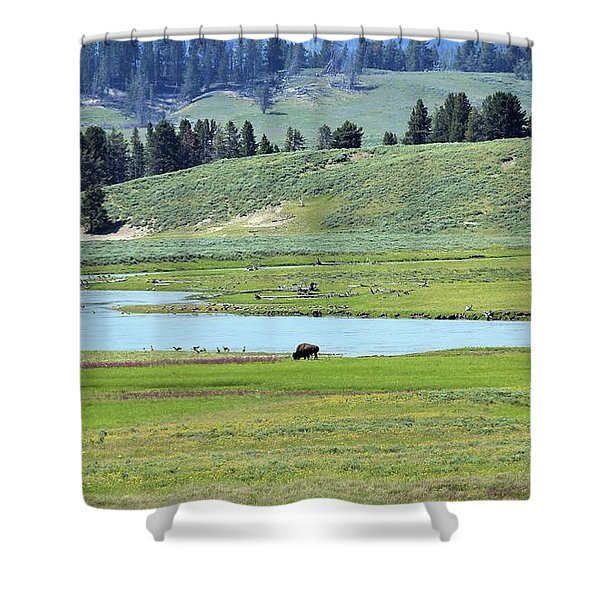 Lone Bison Out On The Prairie Shower Curtain