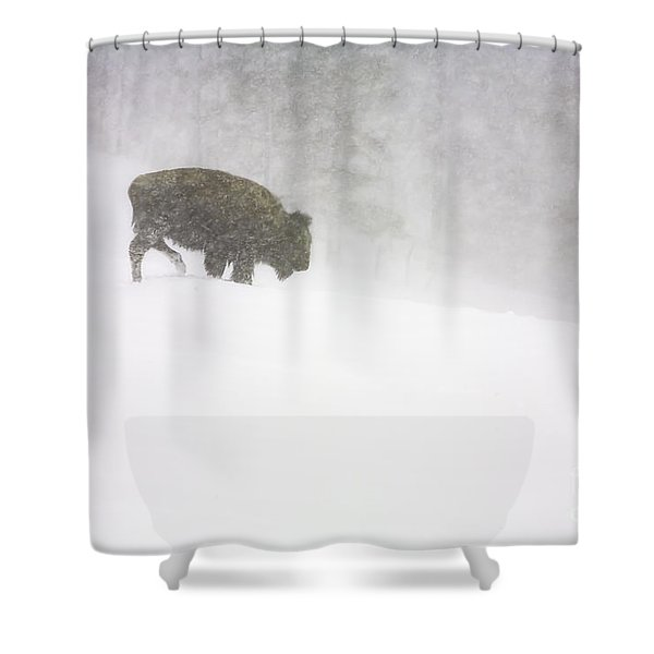 Lone Buffalo Bull In Winter Storm Shower Curtain
