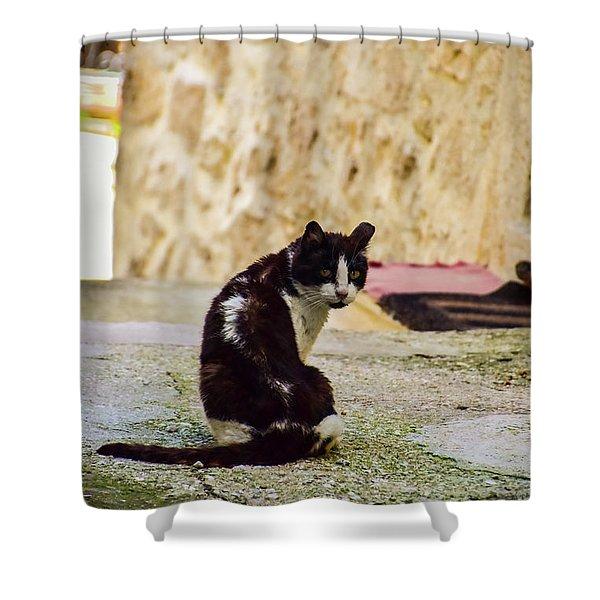 Lone Cat Shower Curtain