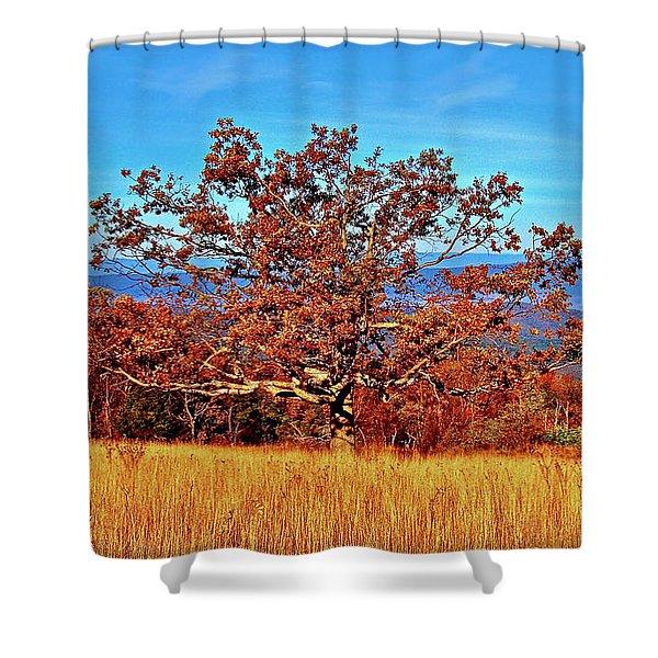 Lone Mountain Tree Shower Curtain