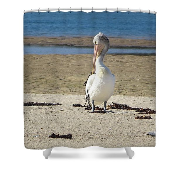 Lone Pelican Shower Curtain