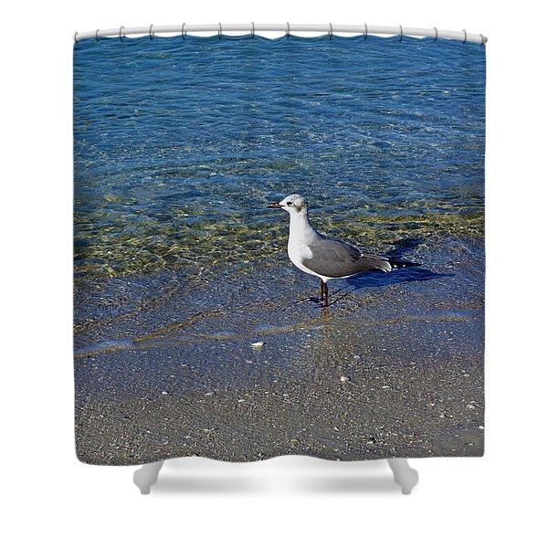Lone Seagull At Miramar Beach In Naples Shower Curtain