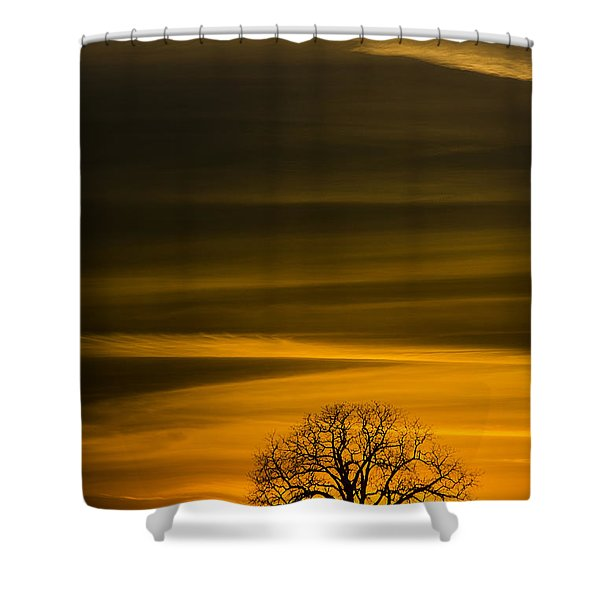 Lone Tree - 7064 Shower Curtain