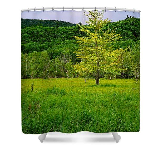 Lone Tree Sieur De Mont Woodland Acadia Shower Curtain