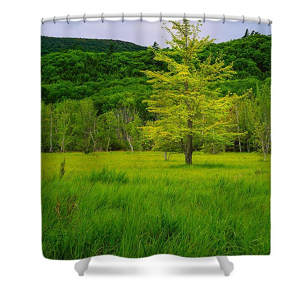 Shower Curtain featuring the photograph Lone Tree Sieur De Mont Woodland Acadia by Jeff Sinon