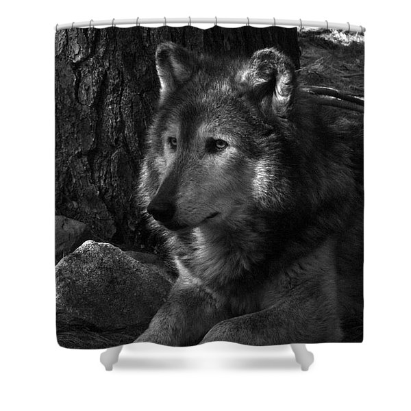 Lone Wolf Shower Curtain by Karol  Livote