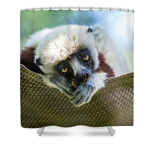 Lonely Lemur Shower Curtain