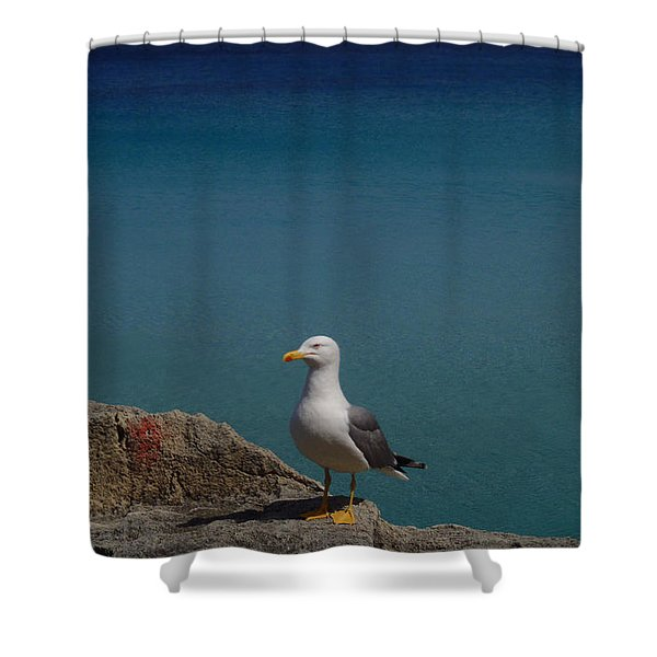Lonely Seagull Shower Curtain