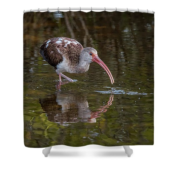 Long-billed Curlew - Male Shower Curtain
