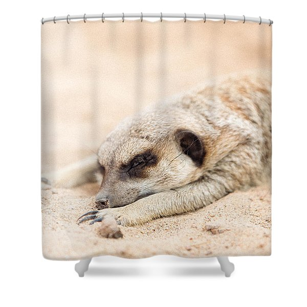 Long Day In Meerkat Village Shower Curtain
