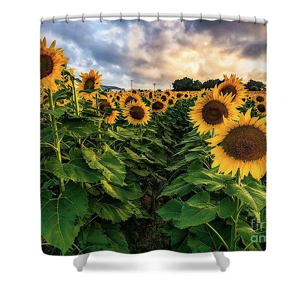 Long Island Sunflowers  Shower Curtain
