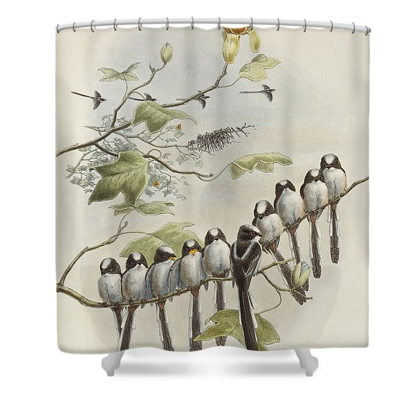 Long-tailed Tit  Shower Curtain