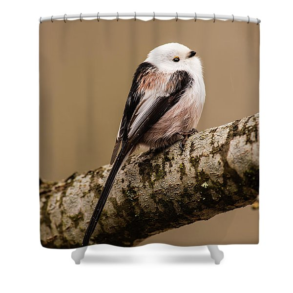 Long-tailed Tit On The Oak Branch Shower Curtain