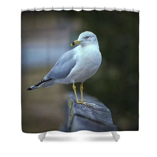 Looking Back  Shower Curtain