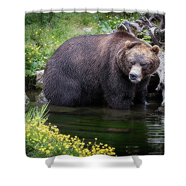 Looking For Dinner Shower Curtain