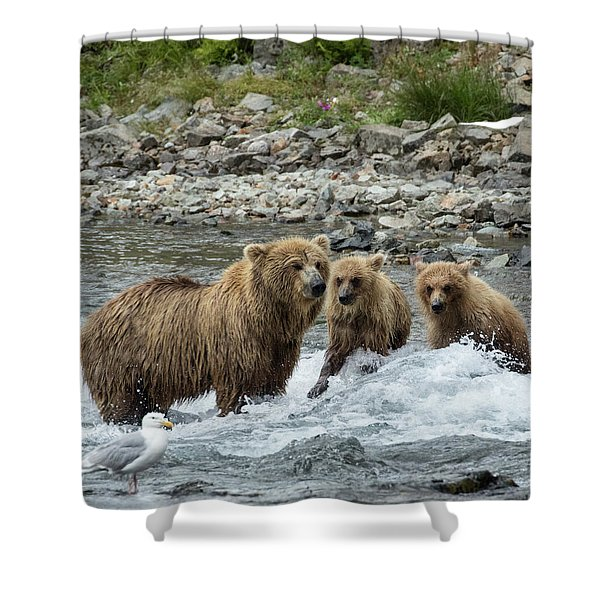 Looking For Sockeye Salmon Shower Curtain