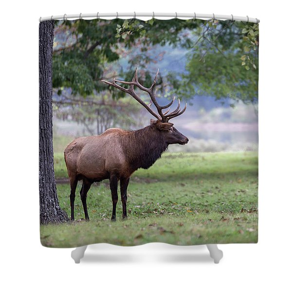 Shower Curtain featuring the photograph Looking Good by Andrea Silies