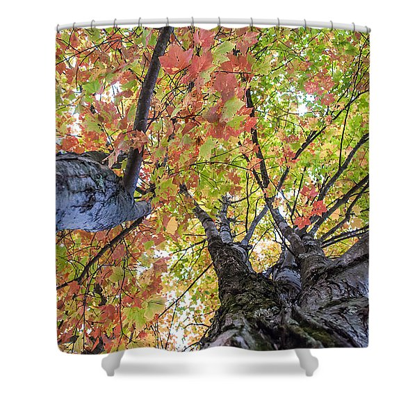 Looking Up - 9670 Shower Curtain