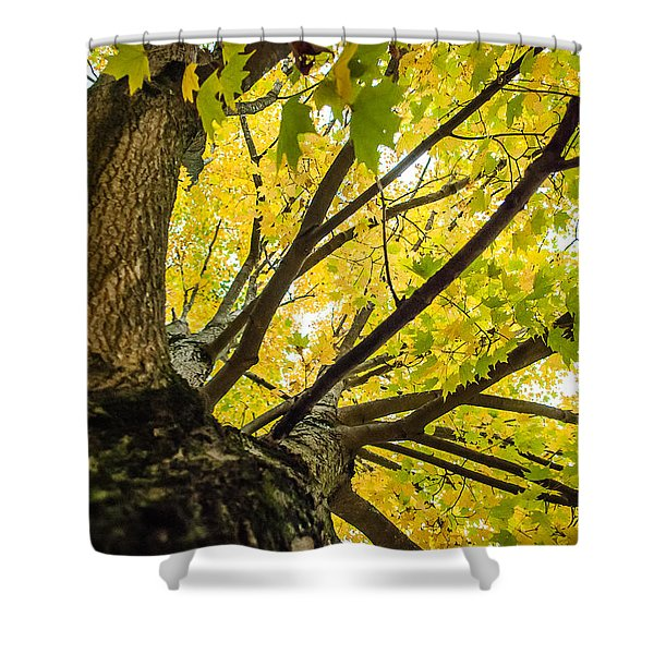 Looking Up - 9676 Shower Curtain
