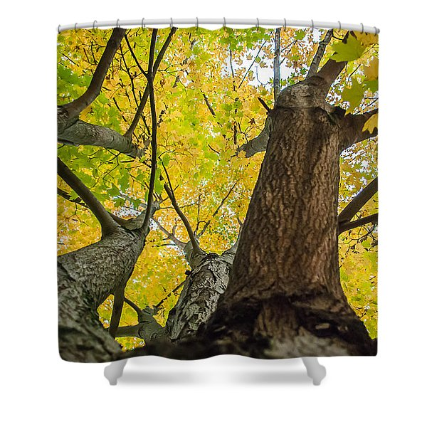 Looking Up - 9682 Shower Curtain