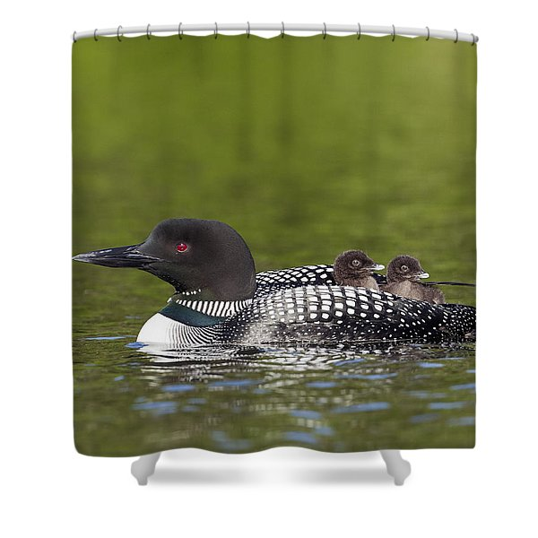 Loon Taxi Shower Curtain