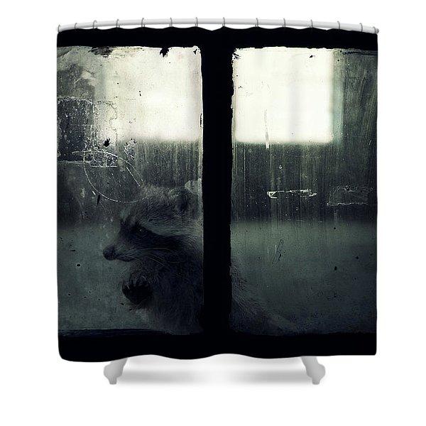 Lost Animals -  Series Nr.3 Shower Curtain