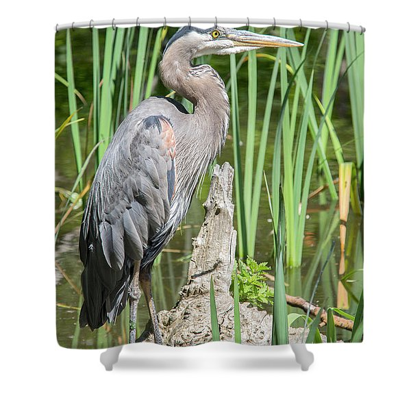 Lost Lagoon Heron Shower Curtain