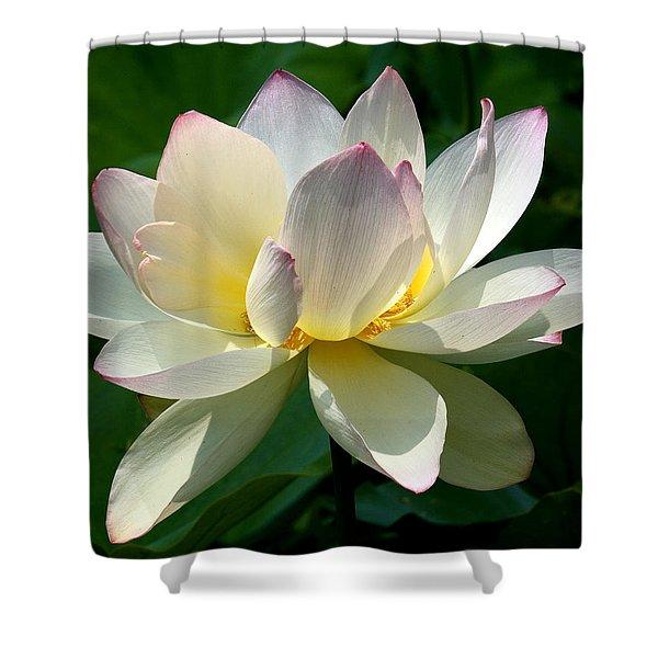 Lotus Beauty--disheveled Dl061 Shower Curtain