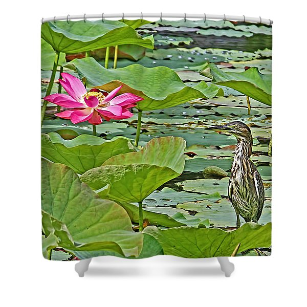 Lotus Blossom And Heron Shower Curtain