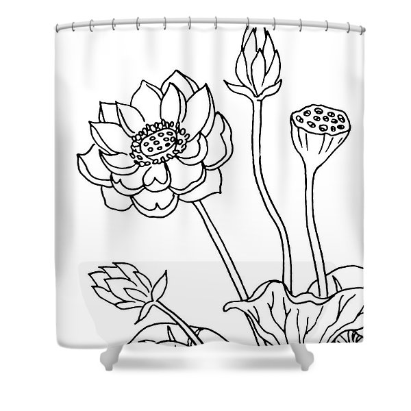 Lotus Flowers Drawing  Shower Curtain