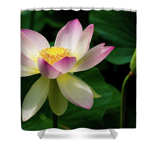 Lotus Lily In Its Final Days Shower Curtain