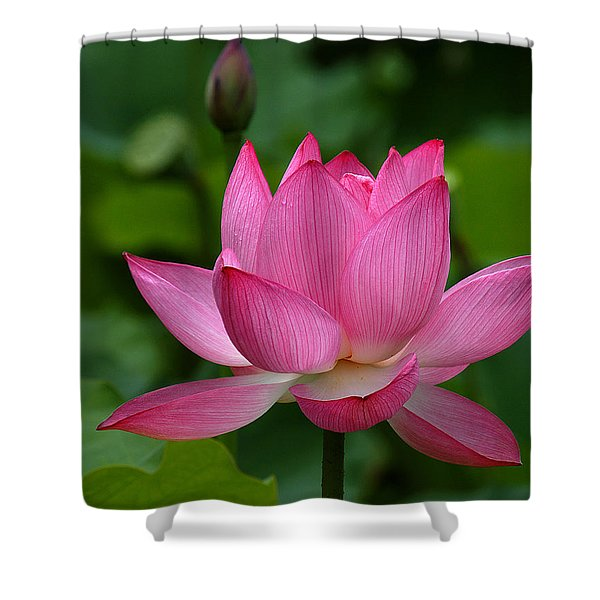 Lotus--shades Of Past And Future Dl029 Shower Curtain