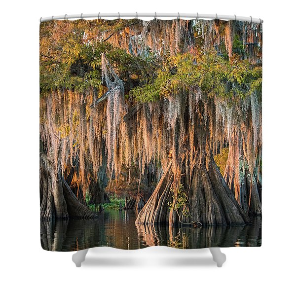 Louisiana Swamp Giant Bald Cypress Trees Two Shower Curtain