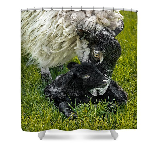 Shower Curtain featuring the photograph Just Born by Nick Bywater