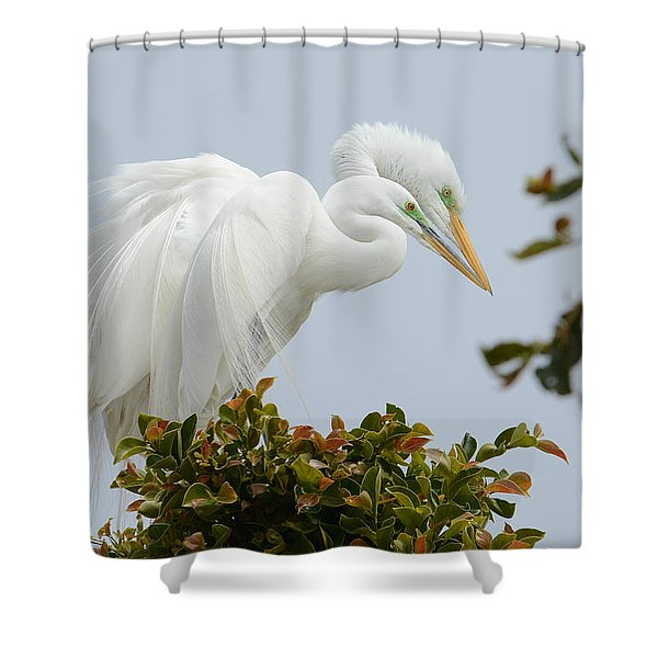 Love In The Treetops Shower Curtain