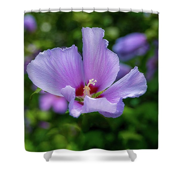 Lovely Hibiscus Shower Curtain