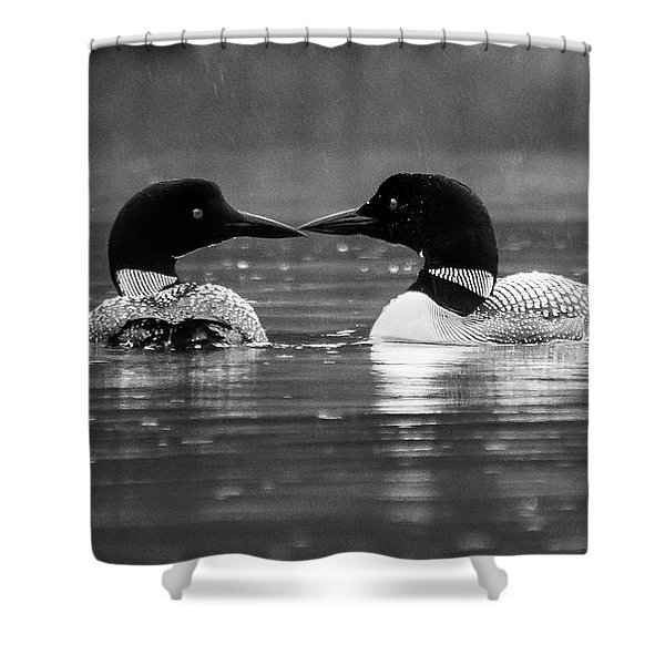 Loving Loons Shower Curtain