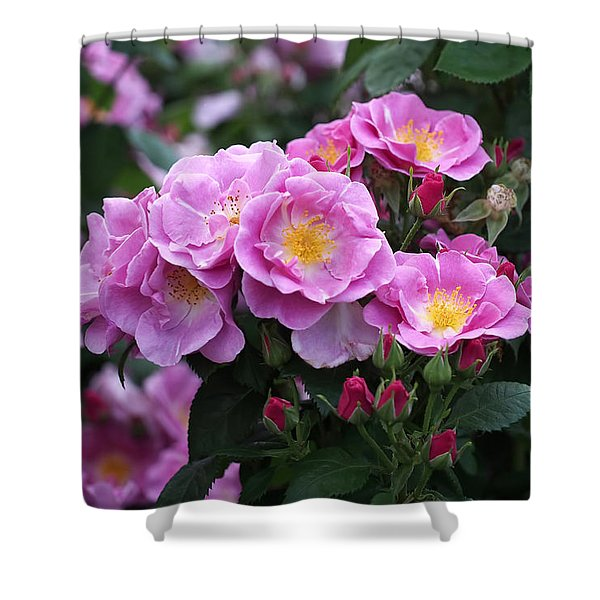 Lucky Floribunda Roses Shower Curtain