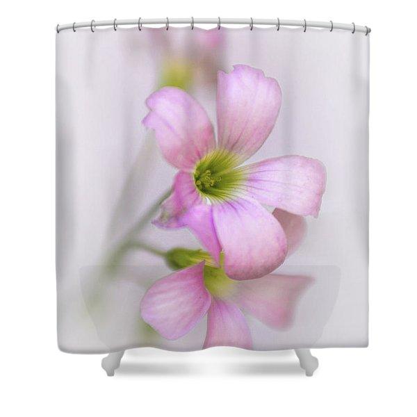 Lucky Pink Shamrock Bloom Shower Curtain