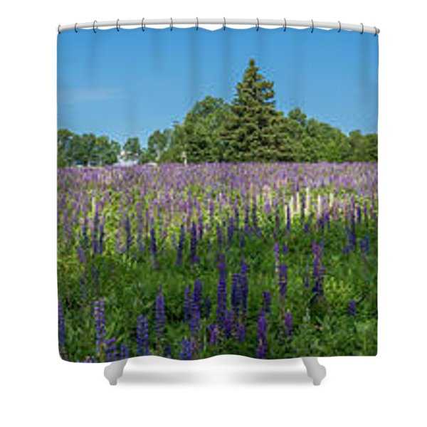 Lupine Field Shower Curtain