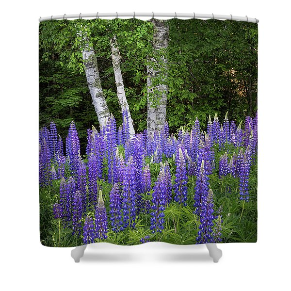 Lupine And Birch Tree Shower Curtain