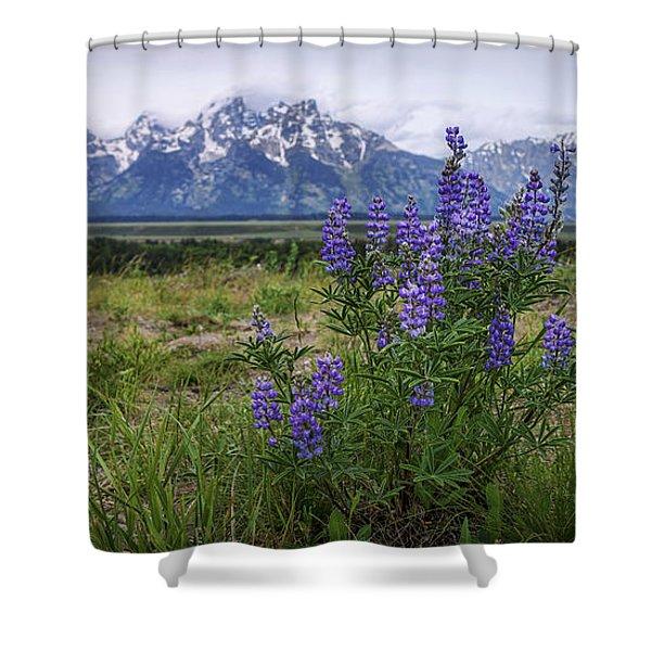 Lupine Beauty Shower Curtain