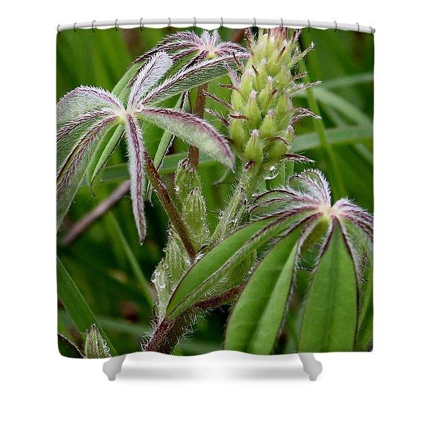 Lupine Bud Shower Curtain